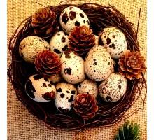 Ouă de prepeliţă