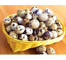 ouă de prepeliță vrac