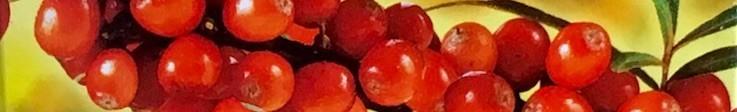 Făină vegetală degresată (Мука растений, обезжиренная)